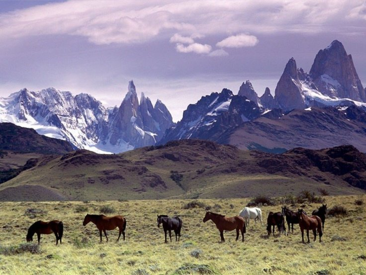 Cavalli_Al_Pascolo_Ai_Piedi_Del_Massiccio_Del_Fitz_Roy,_Patagonia (1)
